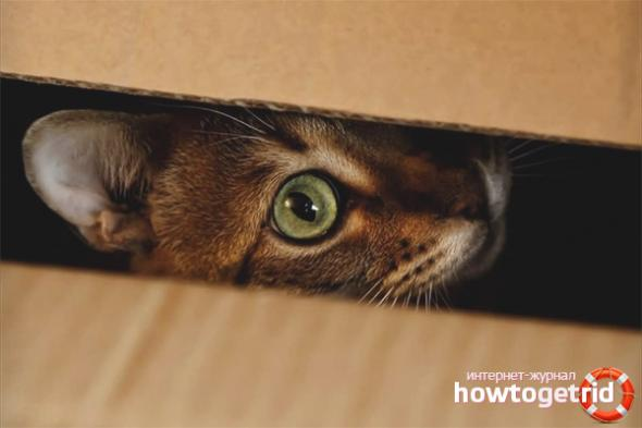 Кошка прячется в темные места — почему и что делать? - ZdavNews