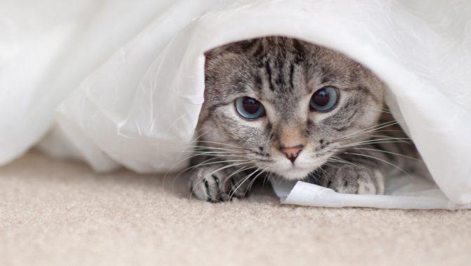 кошка прячется