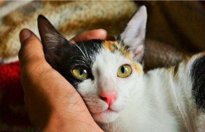 Кошка с хозяин