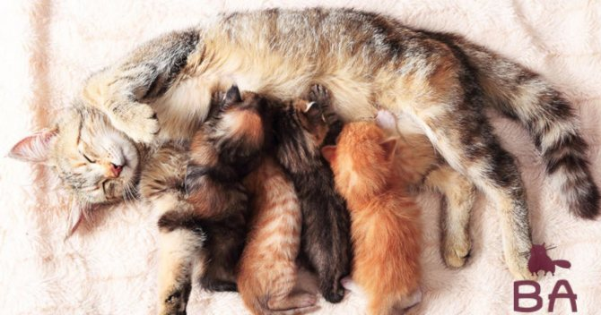 Кошка с котятами, профилактика