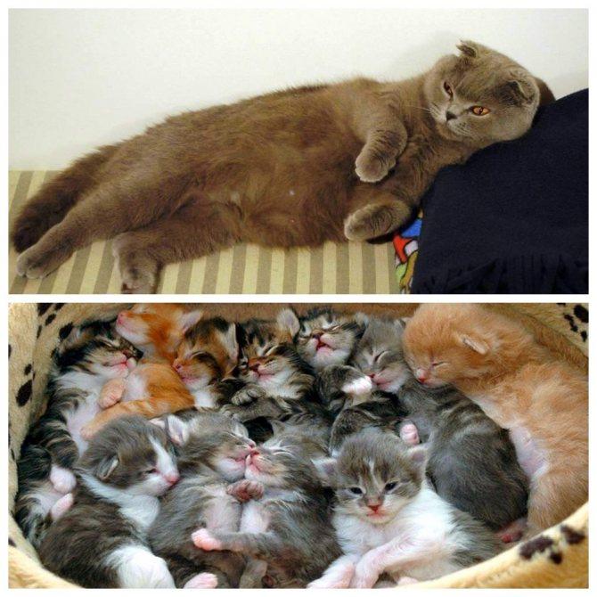Кошка скоро родит – как понять и что подготовить