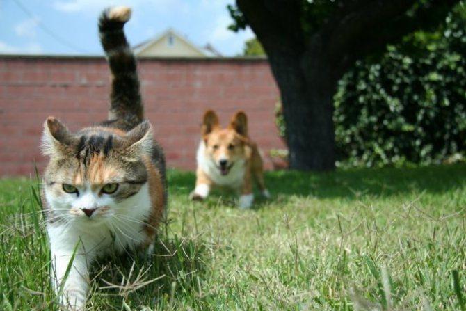 кошка убегает от собаки