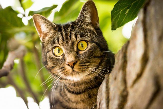 кошка умерла при странных обстоятельствах