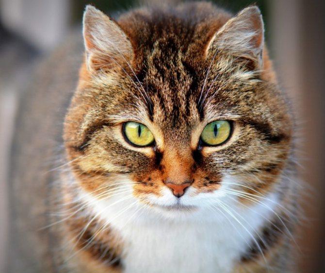 кошка умирает дома приметы