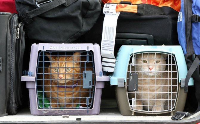 кошка в багажном отделении