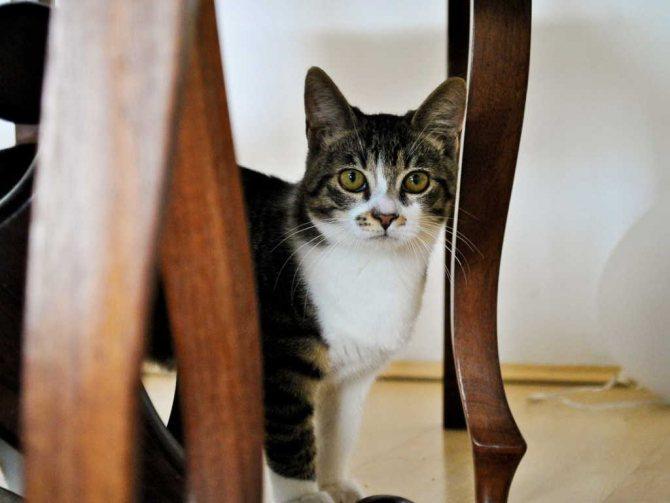 Кошка в гостиной