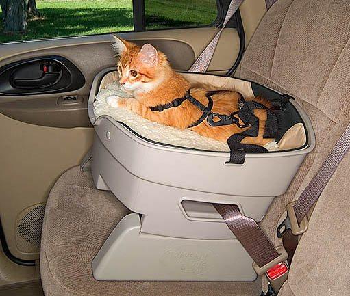 кошка в перевозке в авто