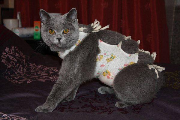 Кошка в попоне из ткани