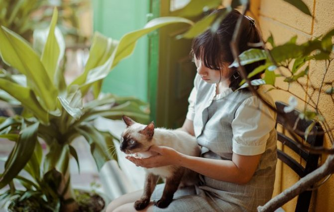 Кошка в Тайланде