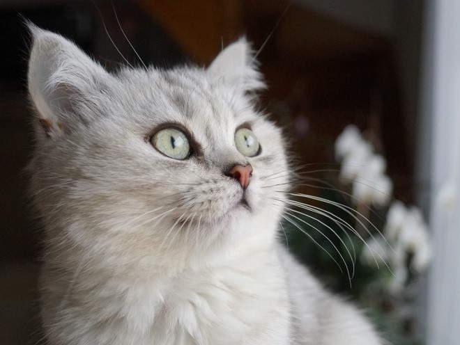 Кошка внимательно смотрит в окно