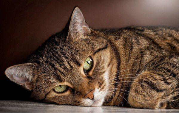 Кошка всегда сама по себе, особенно полосатая...