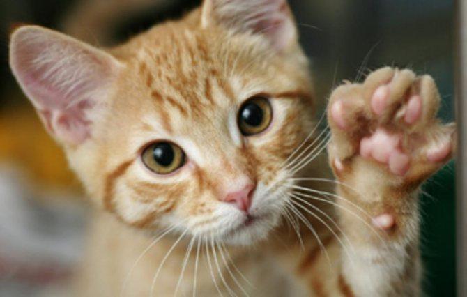кошка закапывает еду что это значит