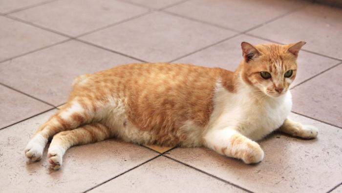 кошка ждет котят