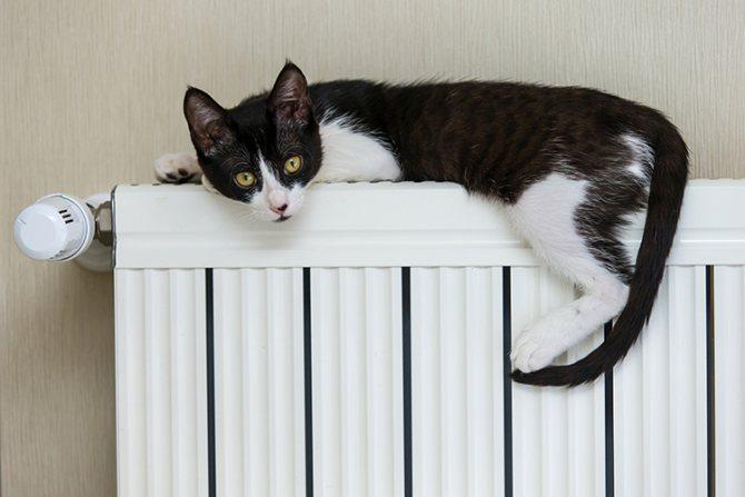 Кошке холодно, что делать?