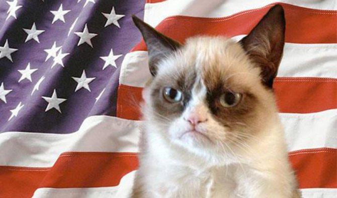 Кошки Америки