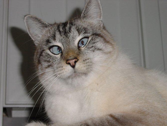 Кошки и валерианка