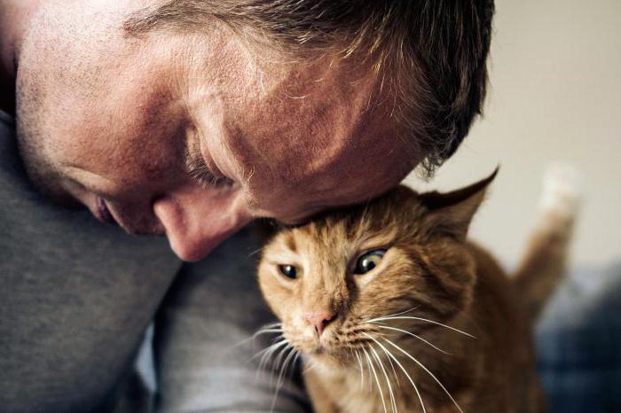 Кошки лечат болезни людей