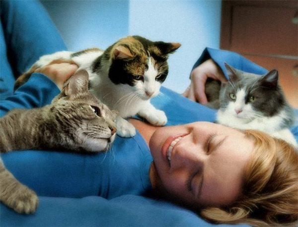 Кошки лежат на груди у любимой хозяйки