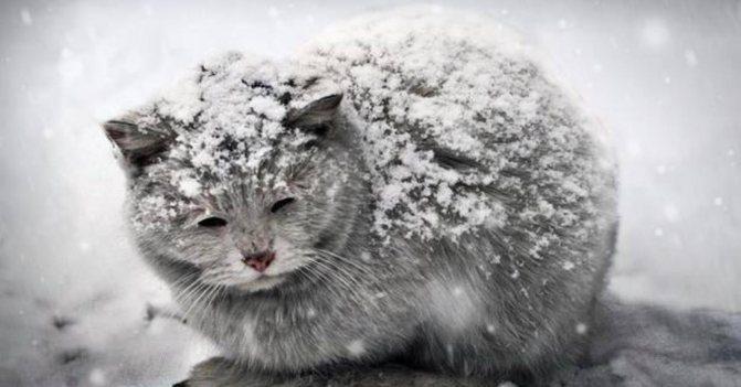 кошки мерзнут