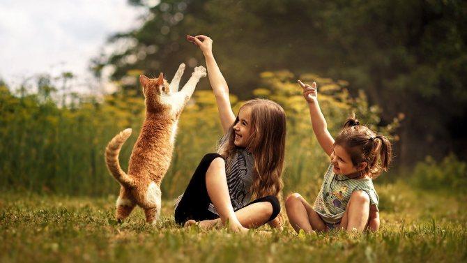 Кошки: польза и вред для человека