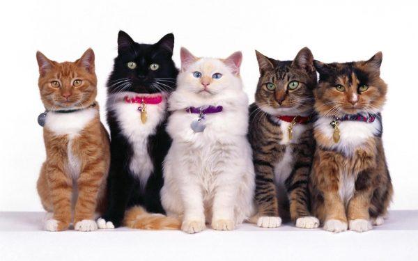 Кошки разного окраса