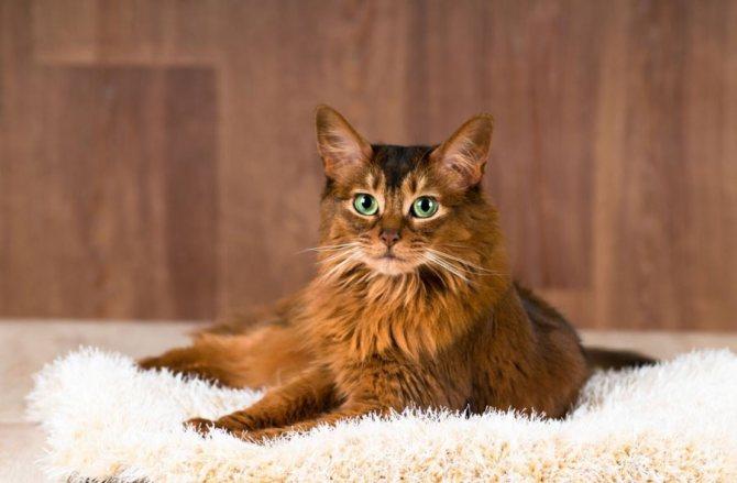 Кошки с зелеными глазами: порода, фото