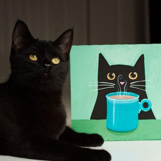 Кот бомбей.jpg