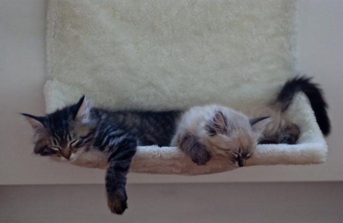 Кот дрожит когда лежит. Почему у кота трясутся задние лапы