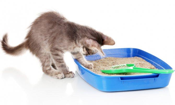 Кот ест наполнитель
