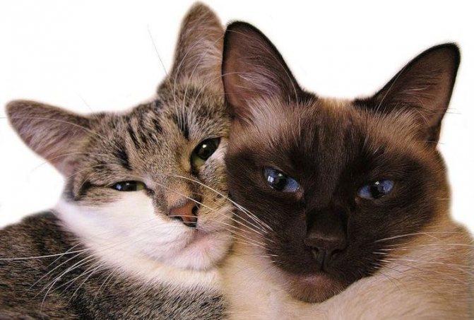 Кот и кошка лежат рядом
