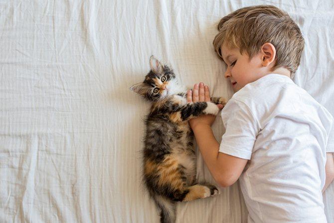 Кот и ребенок в одном доме
