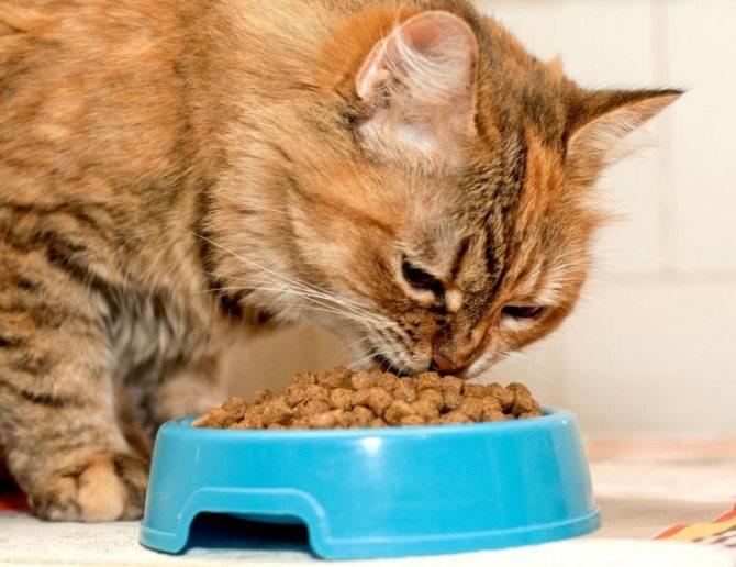 кот икает после еды