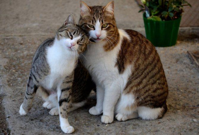 Кот или кошка кого выбрать