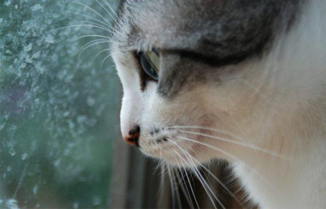«Кот, который любил гулять сам по себе...» Почему кошки сбегают из дома? рис 4