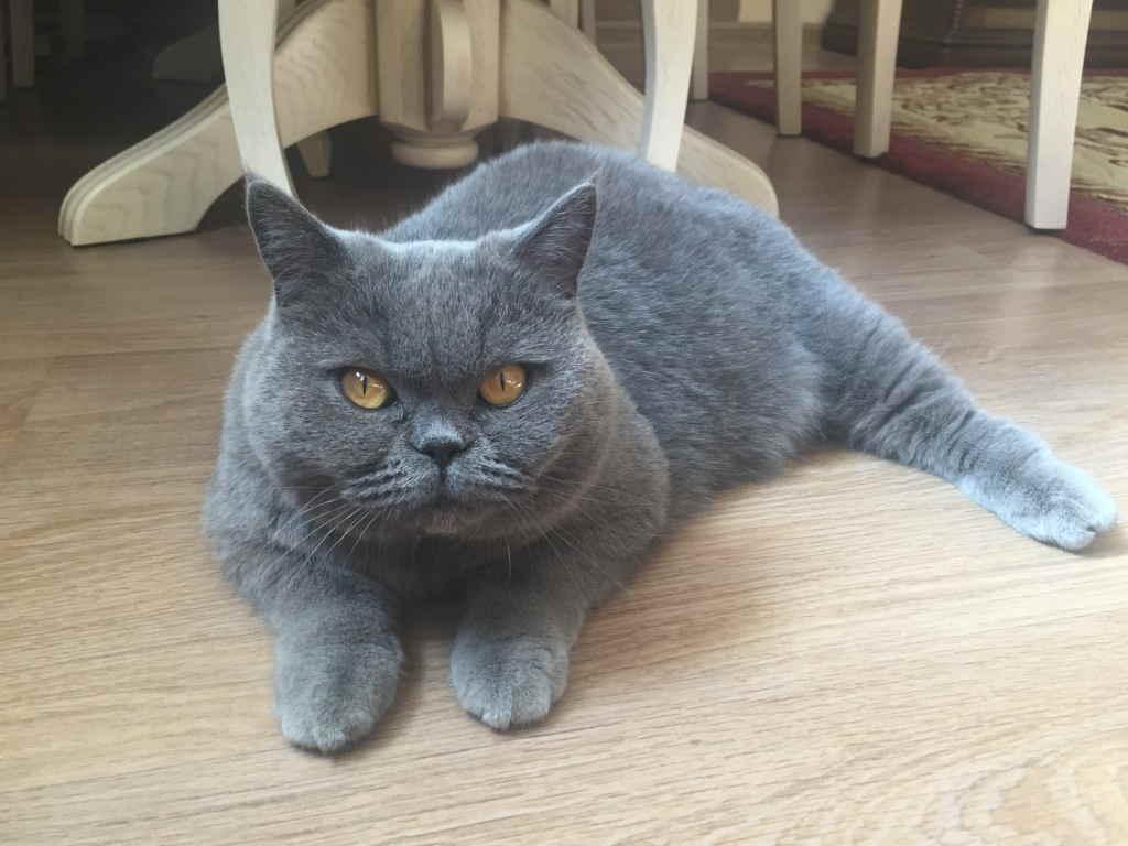 Кот на полу