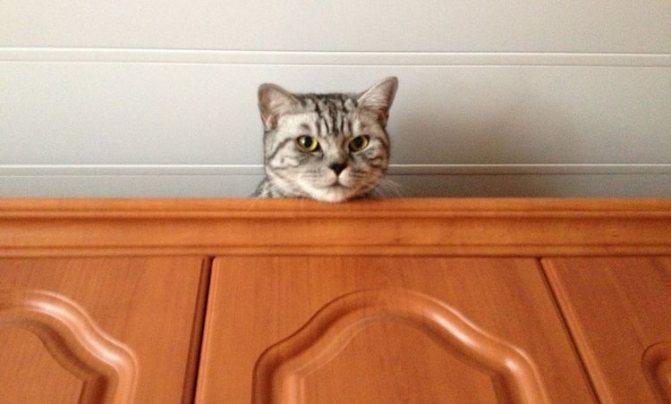 Кот на шкафу