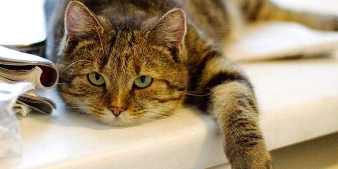 Кот ничего не ест и его рвёт: