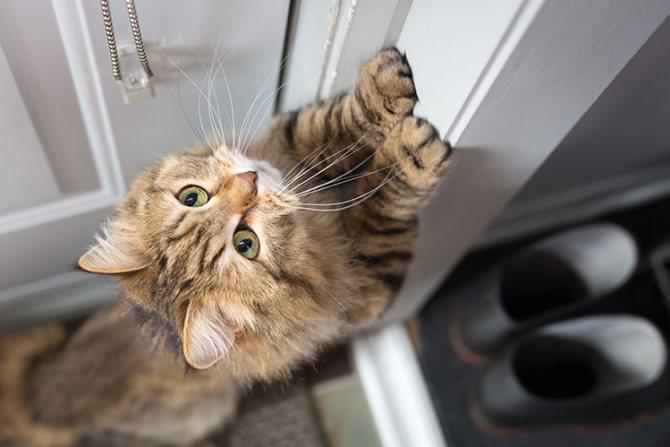 Кот орет по ночам: что делать?