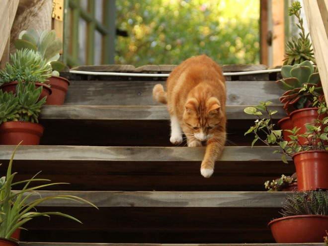 Кот осторожно спускается по лестнице