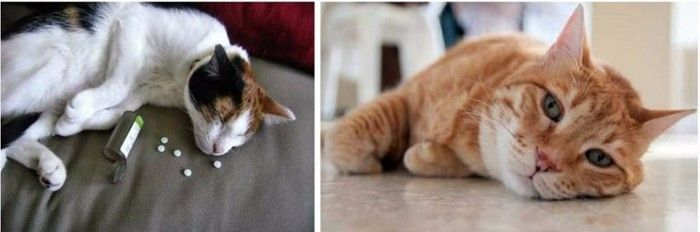 кот отравился