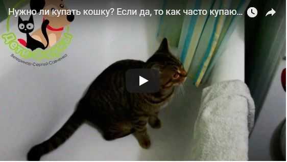 Кот после кастрации: как ухаживать?