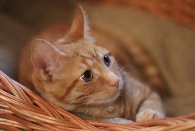 Кот после кастрации много спит нужно ли волноваться