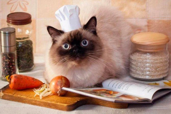 Кот-повар читает рецепт