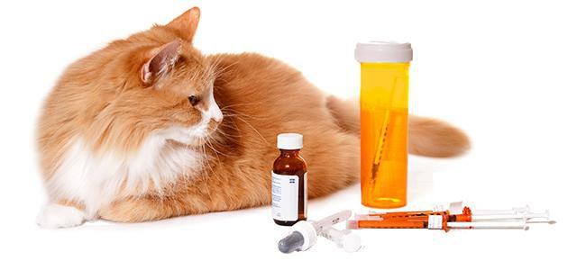 кот простудился