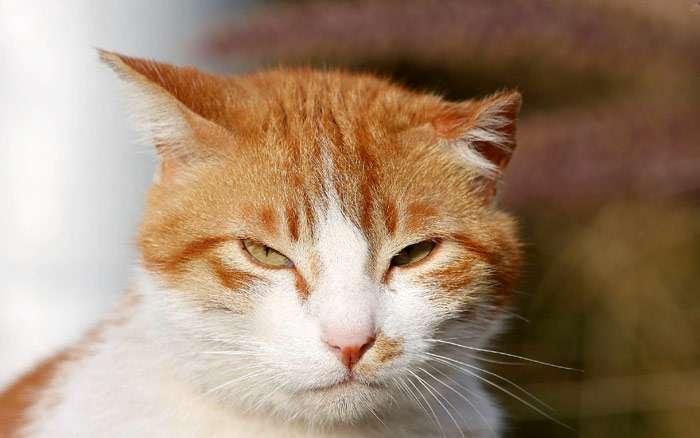 Кот с недобрым взглядом, фото фотография