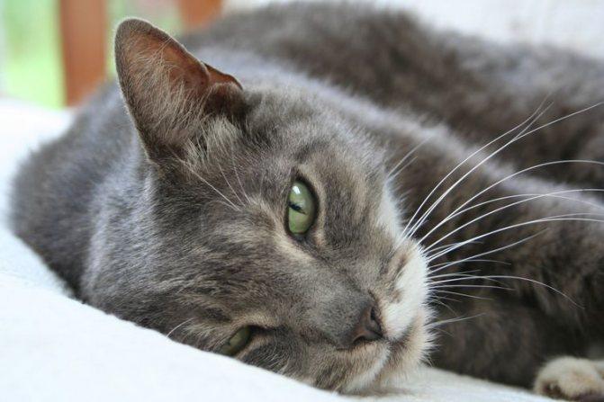 Кот с признаками болезни