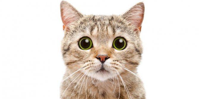 Кот съел осу что делать