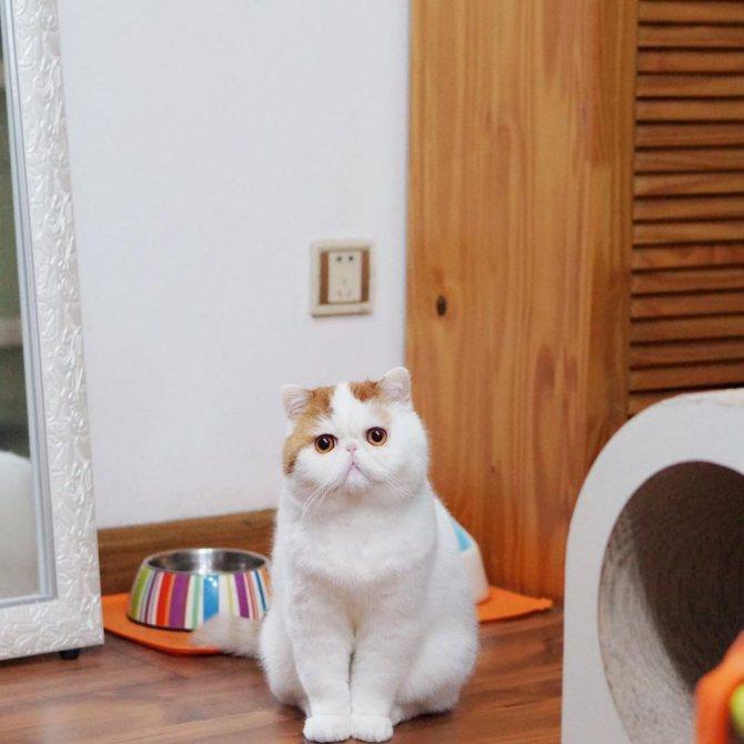 Кот Снупи фото
