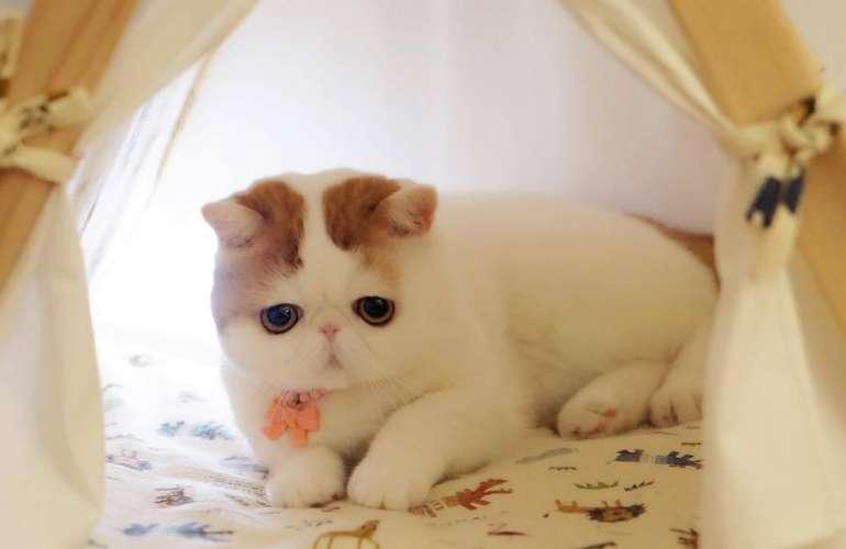 Кот Снупи - плюшевая звезда инстаграма