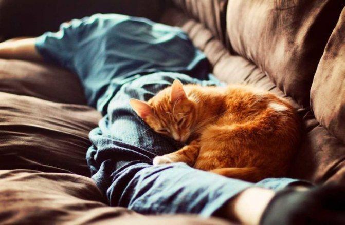Кот спит на ногах хозяина